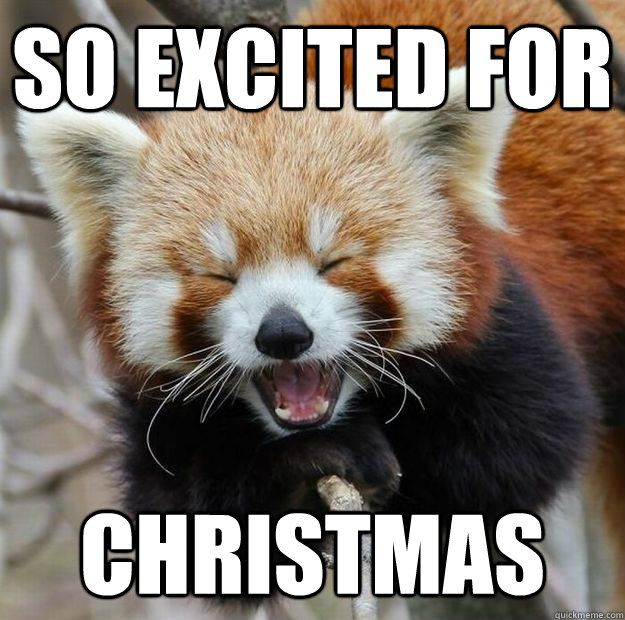 Funny Memes For Christmas : So excited for christmas red panda cute pics pinterest