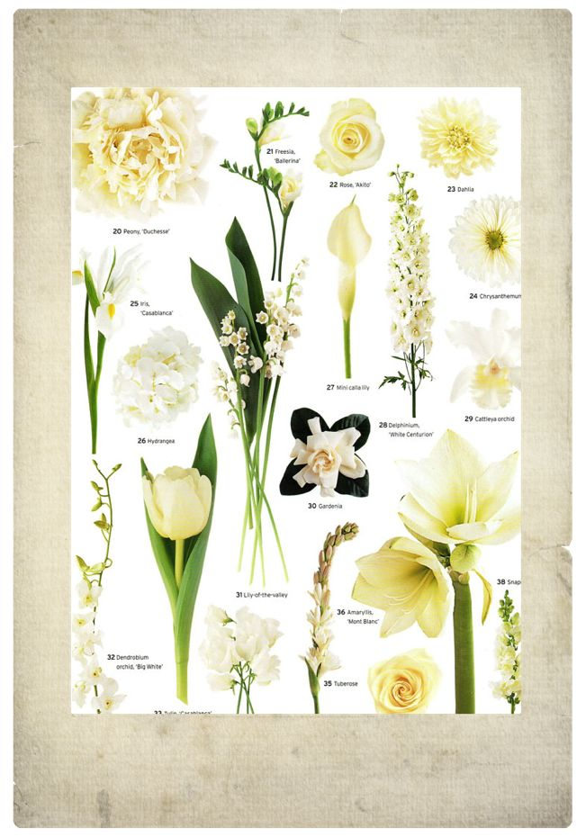White Wedding Flowers Names And Pictures : Pin by engayged weddings on wedding flower names