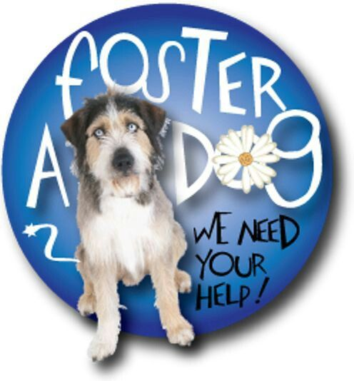 Adopt Your Foster Dog