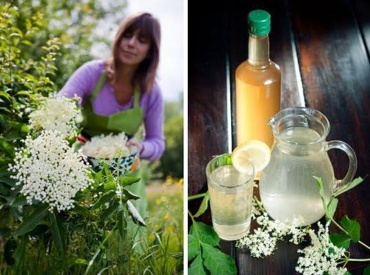 Homemade elderflower cordial | { drink recipes } | Pinterest
