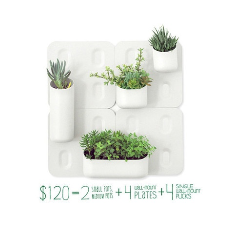 wall mount and plant holders WANT home sweet home