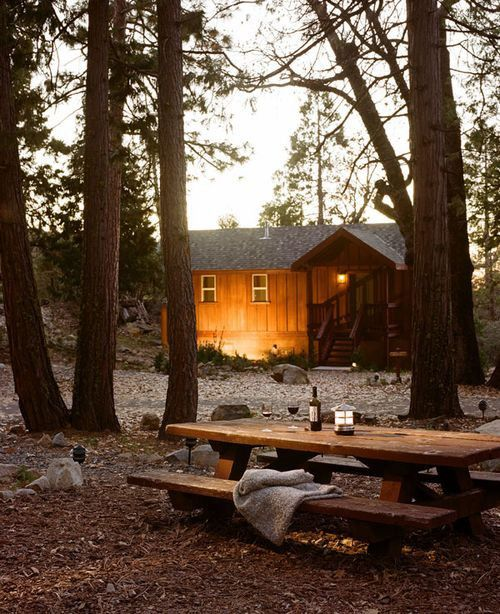 Cabin living, forrest, good mulled wine, walks, and good food