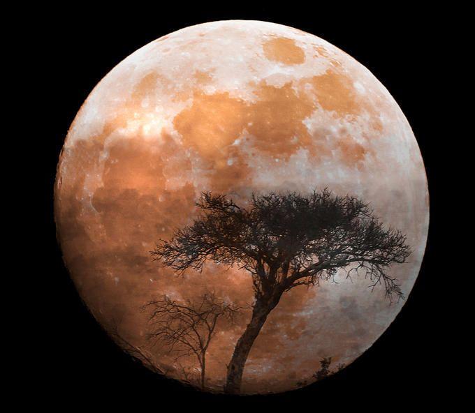 African moon Fluid 7 Pinterest
