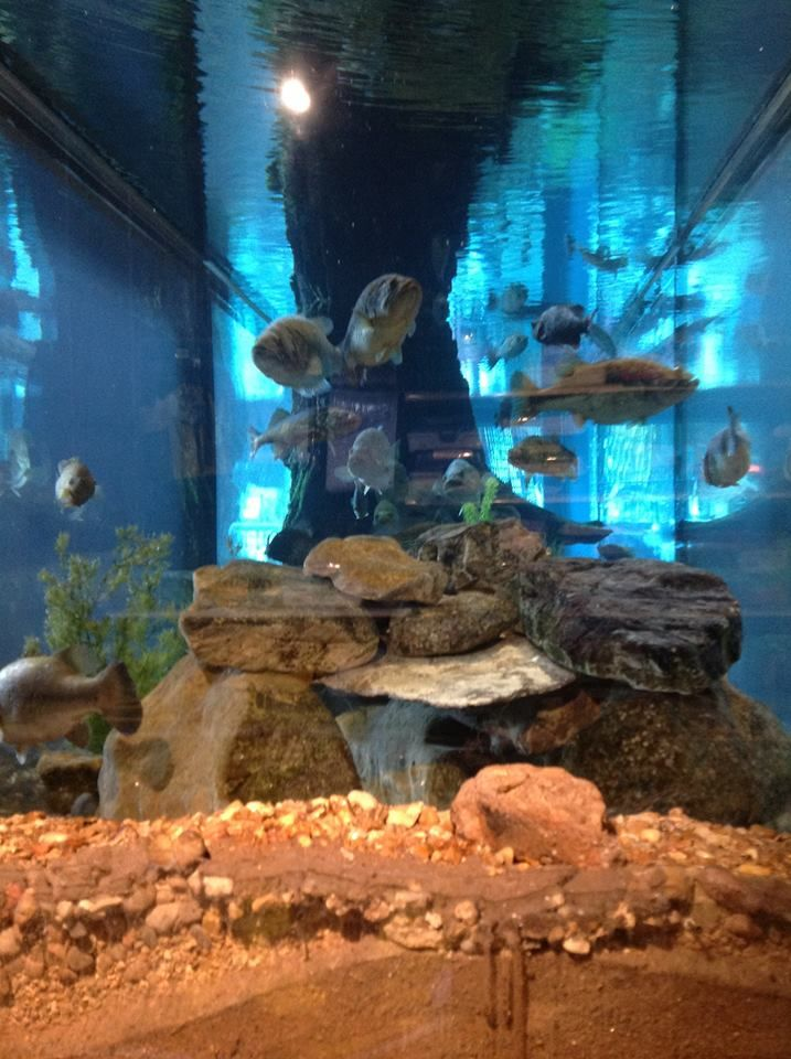 Aquarium at bass pro shops columbia hunting fishing for Bass fish tank