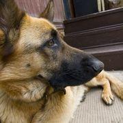 How to get rid of pet odor in carpet