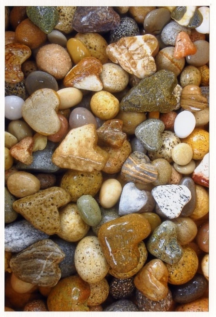 Each time I walk the beach at the Chesapeake Blues Festival a heart shell or rock appears.    5cadd1dcee27f1c378fb8172bca8f630.jpg 812×1,189 pixels