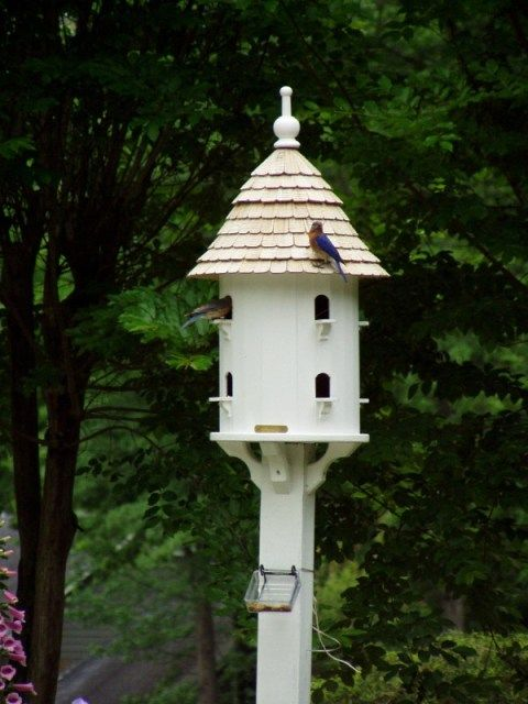 A dovecote in the garden for Dove bird house