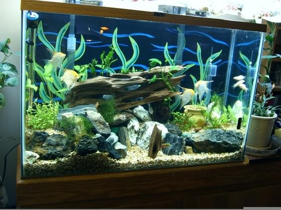 Setup aquarium all things aqua aquaworld pinterest for Freshwater fish tank setup