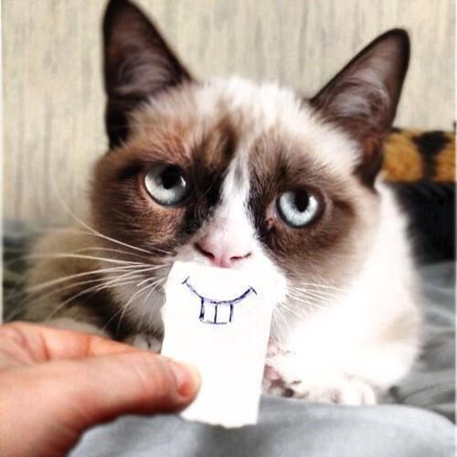 смайлик котик: