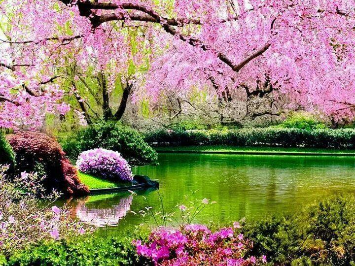 Beautiful Spring Nature Photos