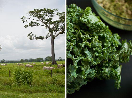 Coconut Quinoa and Kale with Tropical Pesto | Recipe