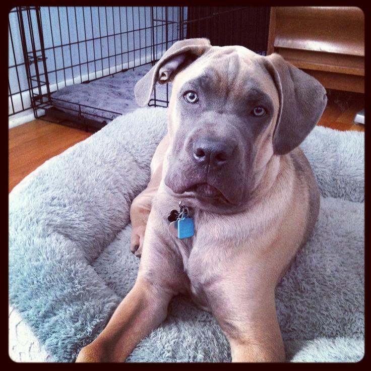 my favorite animal dog essay