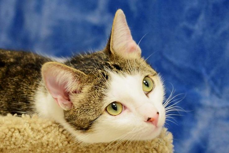Greyfoot Cat Rescue Ventura