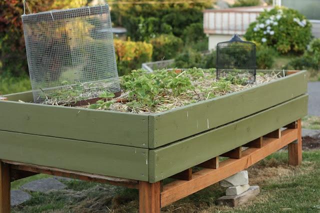 Pin by Sharon Chapman on Gardening | Pinterest