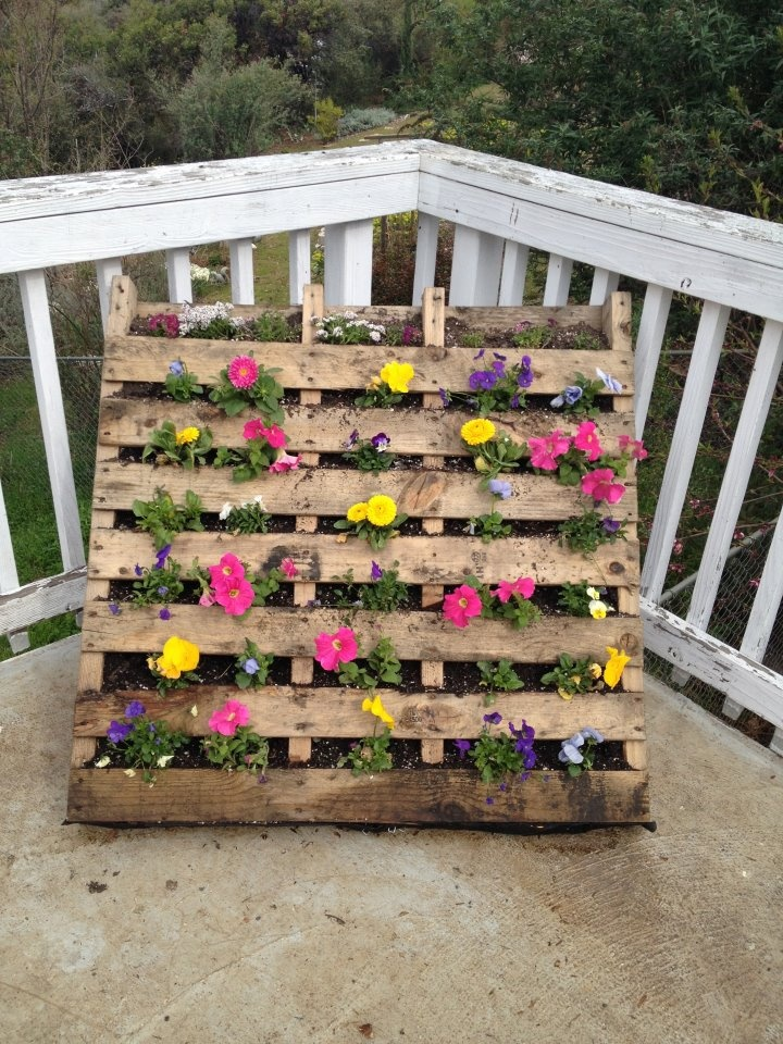 palette flower bed pallets pinterest