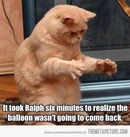 Cat joke poor Ralph