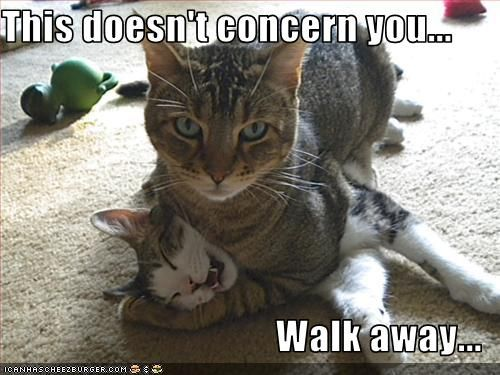 This happens here all the time - with both dogs and cat.