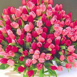 www.micheal kor Apple Blossom Tulips  flowers flowers flowers