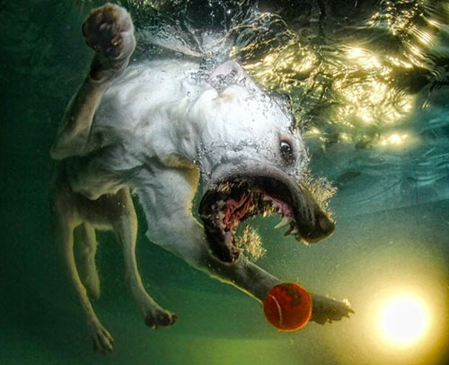 Evoke photo dogs underwater this is a great perspective and the
