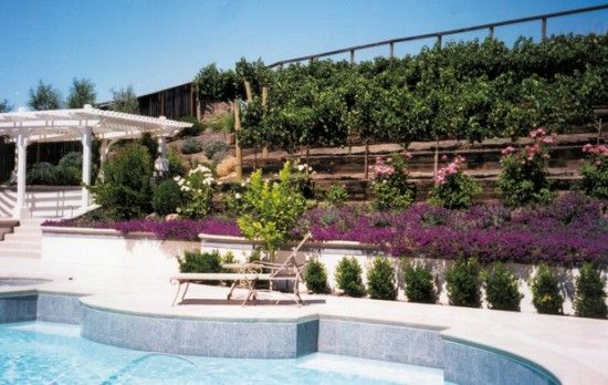 Backyard Vineyard Ideas : Organic Backyard Vineyardand it doesnt need a ton of space