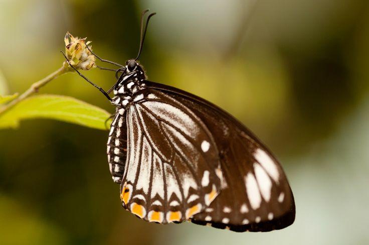 Butterfly - Macro Ph