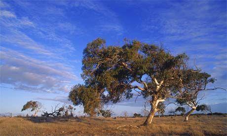 Gumtree dating australia