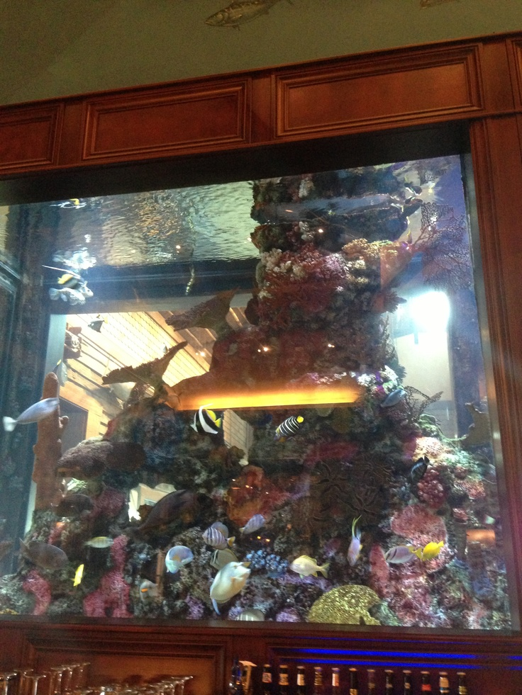 Fish tank at islamorada in bass pro shop i love fish for Bass fish tank