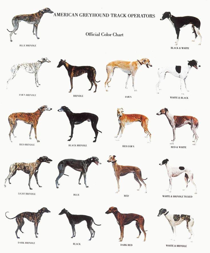 Le Greyhound 5d798e009d27a773e77ed540672ed2ef