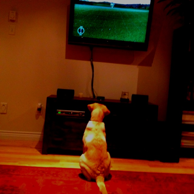 Watching me play tiger woods telling me where to shoot.