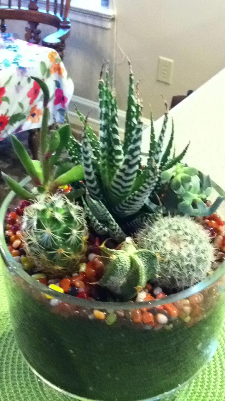 Indoor Cactus Garden Ideas Photograph | Cactus planter- love