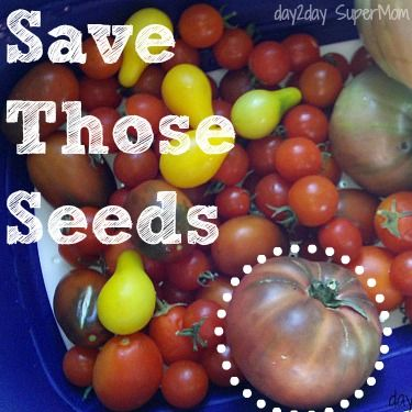 Learn How to Save Your Tomato Seeds in 6 Simple Steps ~ GreenThumb Thursday