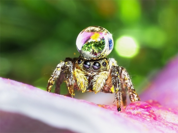 Jumping spider water hat - photo#17