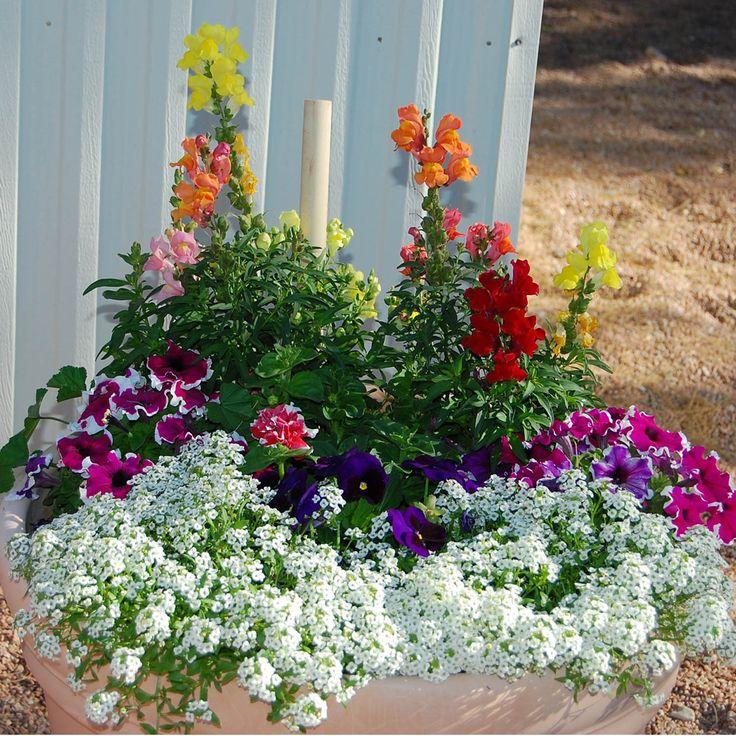outdoor flower pots arrangements images