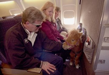 Did you know? Miniature horse guide animals may fly in airplanes!