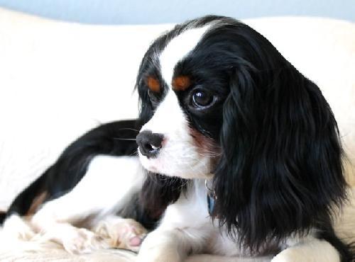 Dogs For Adoption Aspen Co