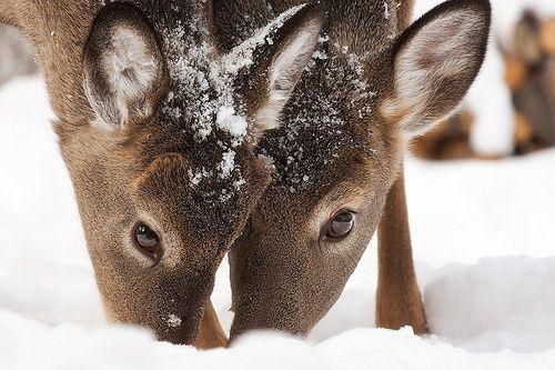 deer   pals