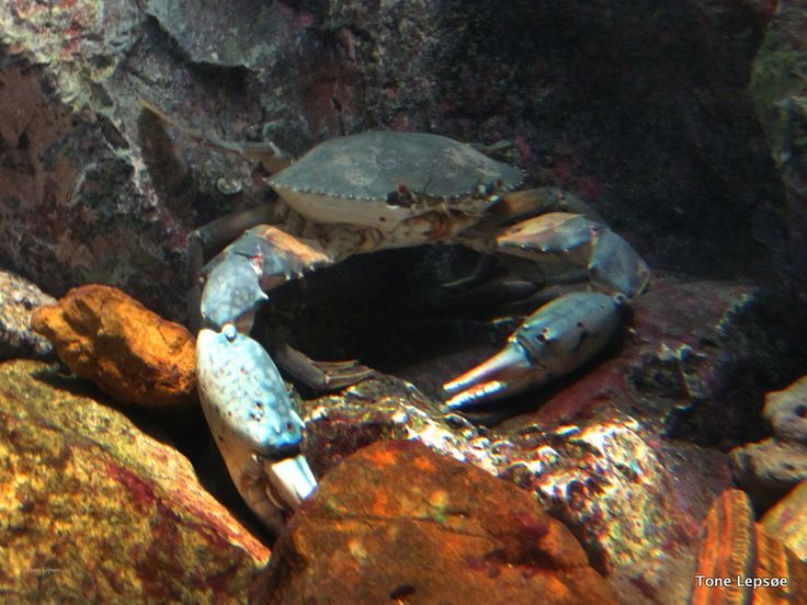 RAYONG AQUARIUM. Thailand. Join me on: Tone Lepsoes pictures on ...