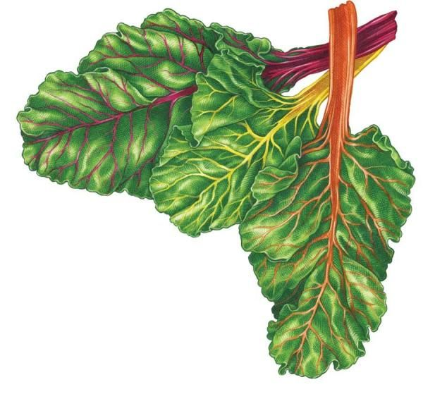 All About Growing Swiss Chard - Organic Gardening