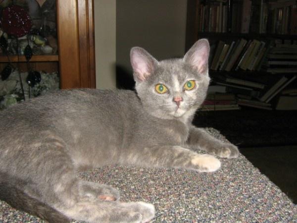 final stages of feline leukemia