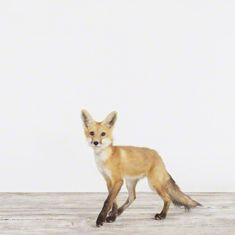 We see the fox having its moment in 2014. #foxy