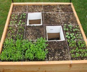 Efficient Vegetable Garden Design Izvipicom