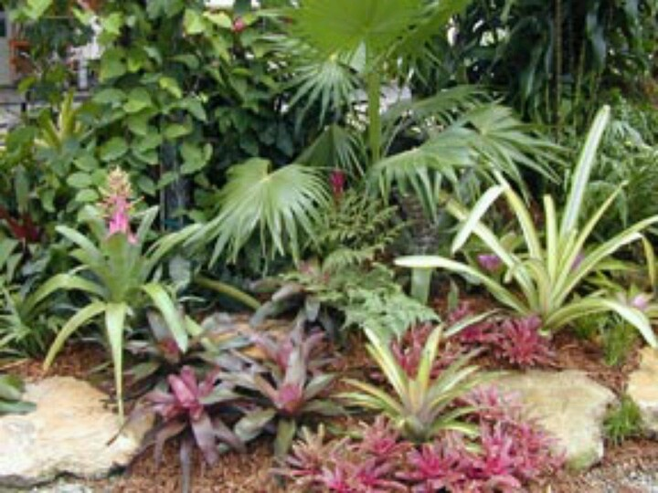 Tropical landscaping ideas for small backyard mystical for Tropical plants landscaping ideas