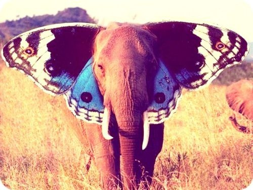painted elephant butterfly - photo #2