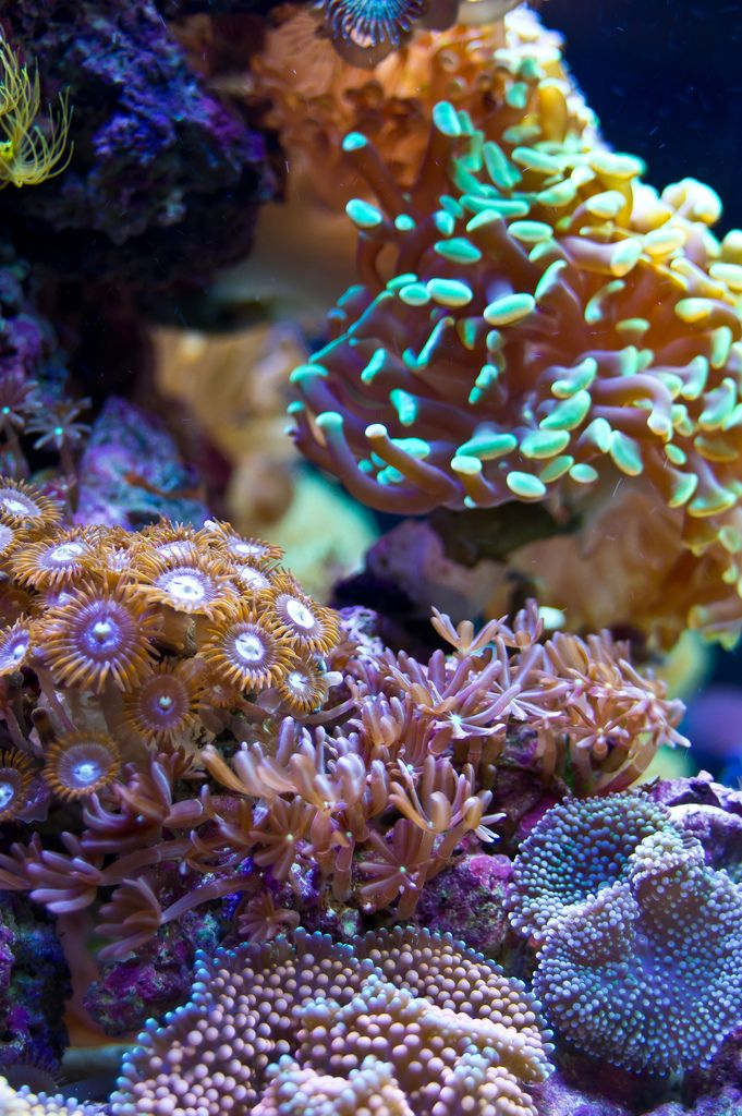 Soft coral types Finding Nemo Pinterest