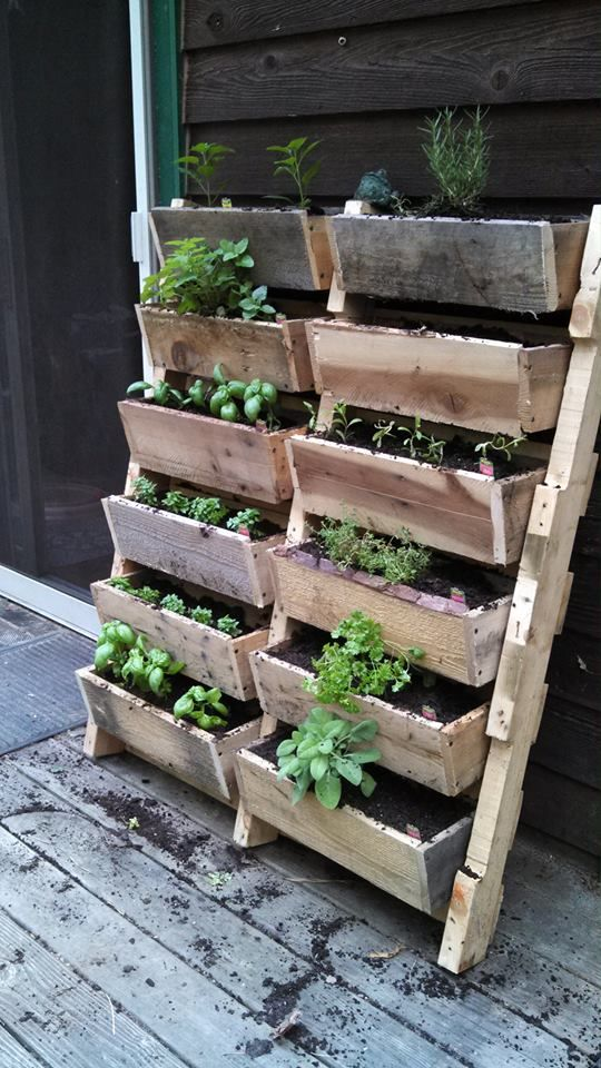 Pallet gardening, perfect for gardening within a small space. Always take advantage of empty vertical space--it will leave your balcony or patio looking clean, not cluttered.