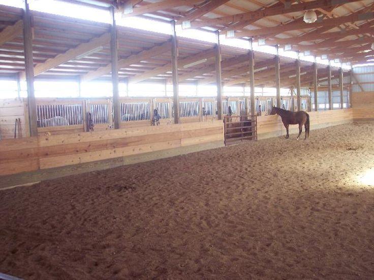 My Horse Forum