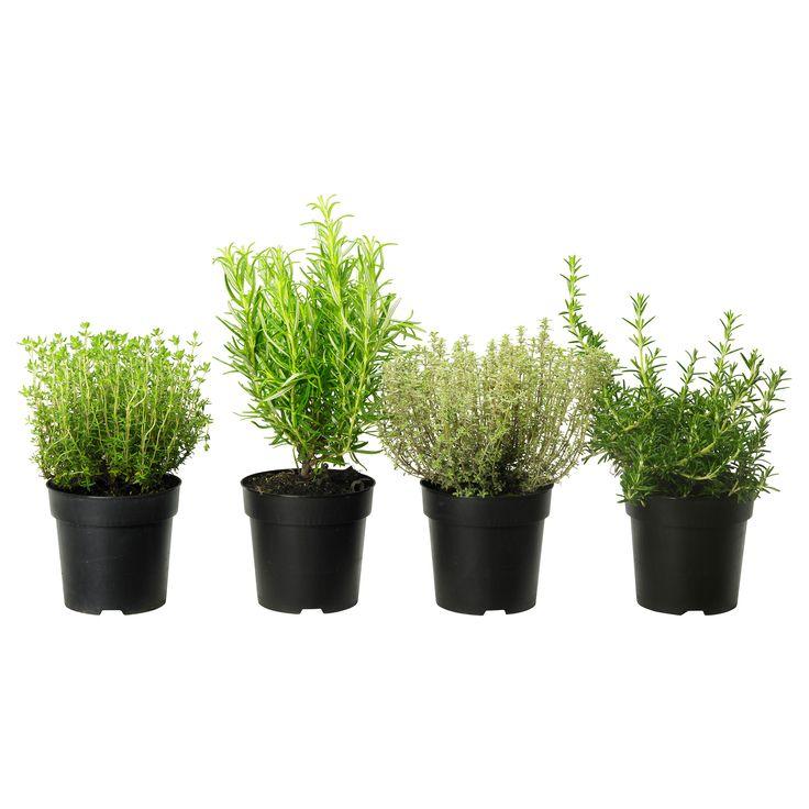 Rtig Potted Plant Ikea Zen Garden Pinterest