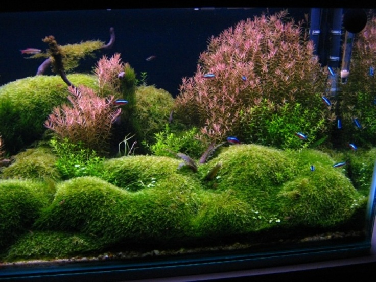 Aquascaping World Competition - Gallery Terariums Pinterest