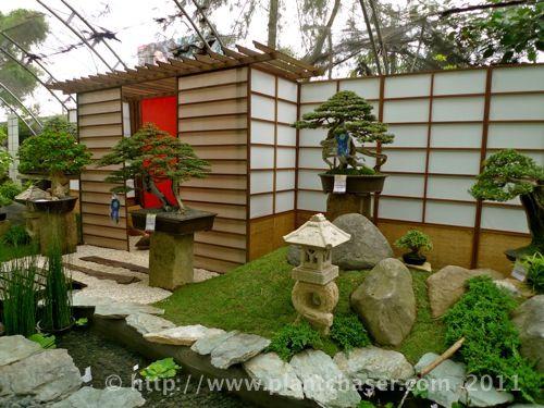 Oriental bonsai garden bonsai display outdoors pinterest for Plants found in japanese gardens