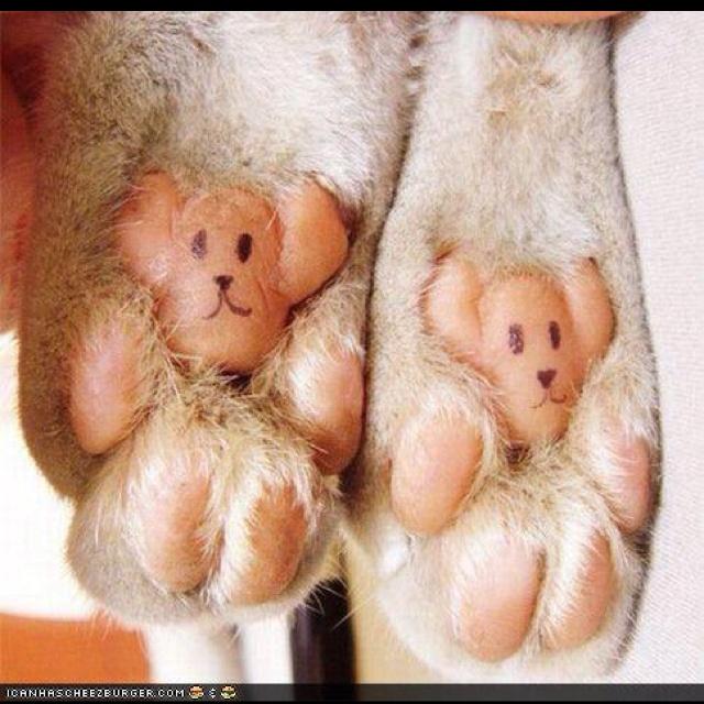 Cat Paws!